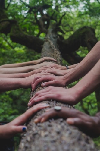 A series of hands touch a tree trunk.